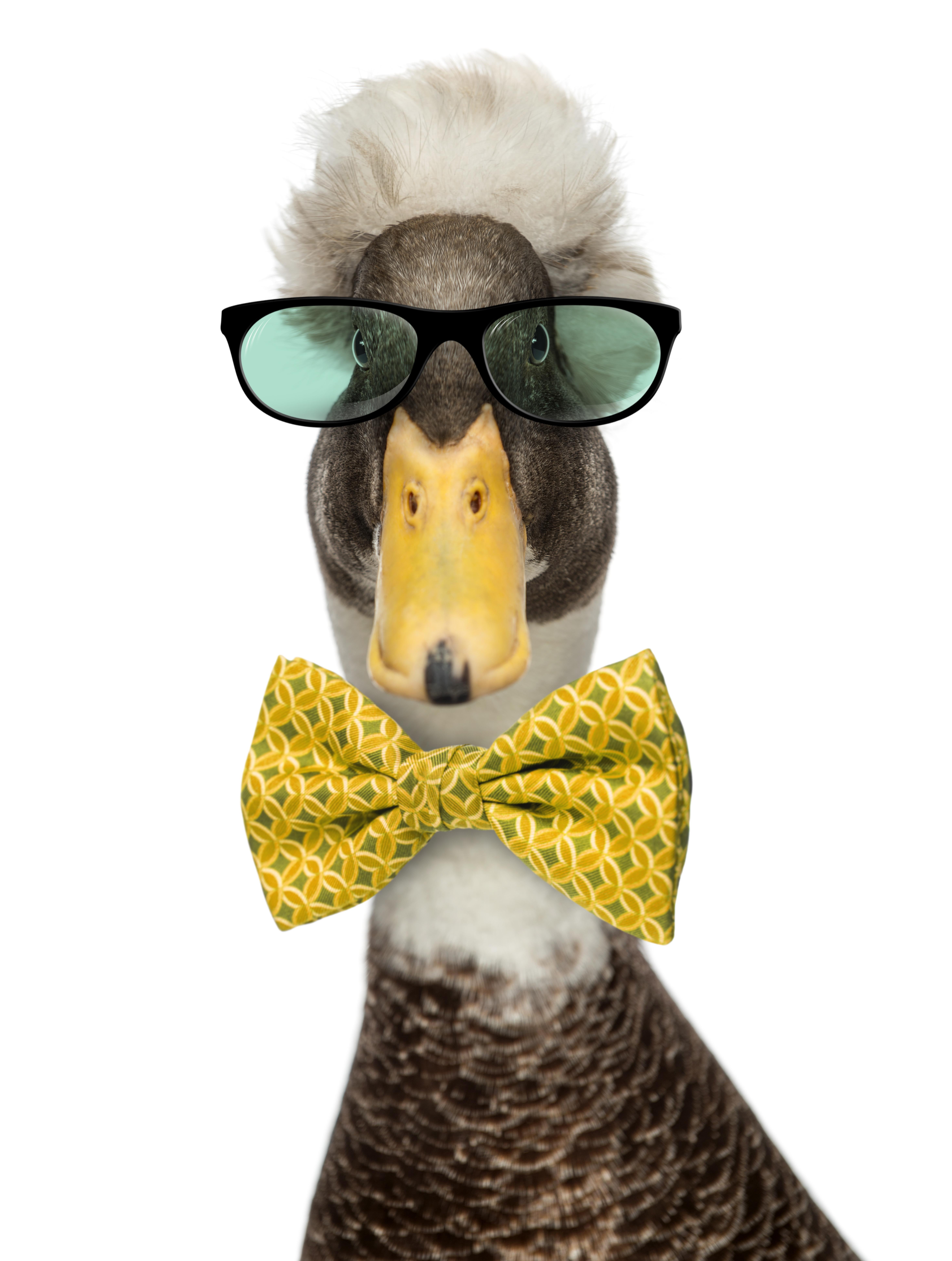 Line your ducks up